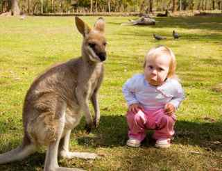 Toddlre with kangaroo